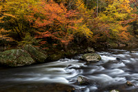 Fall foliage along the Middle Prong of the Little River