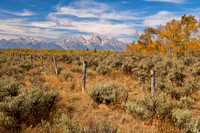 Fence posts and Tetons