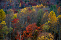 Late Fall Color in Cataloochee Valley