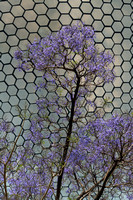 Museo Soumaya and Jacaranda