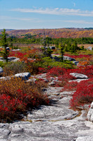 Dolly Sods vertical