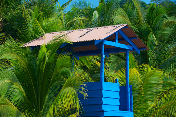 Lifeguard Stand and Palms