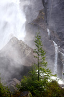 Lone Tree and Shannon Falls