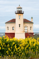 Yellow Lupine and Lighthouse